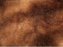 brown_patch_1