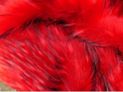 red_peacock_2