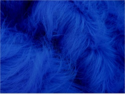 Royal Blue 25-70mm pile
