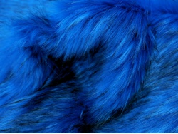 royalblue_fleck_2